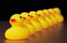 ducks-300x195