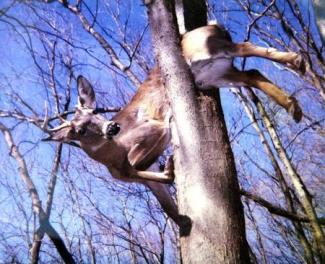 Deer-falls-from-sky-and-crashes-through-windshield-of-minivan-in-Illinois