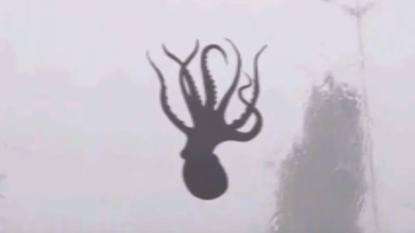 octopus-crazy-storm-qingdao