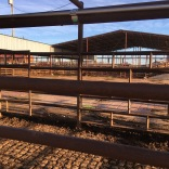 stockyards10